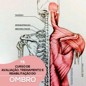 Curso de avaliação, treinamento e reabilitação do ombro.
